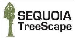 Sequoia TreeScape